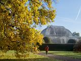 Kew Palm House Autumn