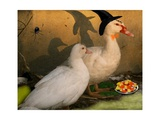 Fred & Lucy Halloween Ducks