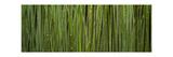 Grass Blades Panorama