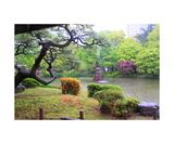 Hibiya Park in the rain in Tokyo