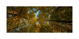 Midwest Forest Canopy