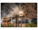 Tokyo Cherry Blossom Festival