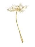 Dandelion 2 Golden White