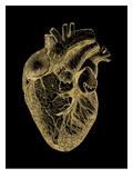 Heart Anatomical Golden Black