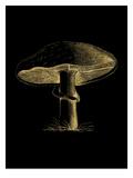 Mushroom Golden Black