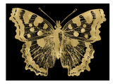 Butterfly 1 Golden Black