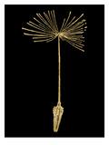 Dandelion 1 Golden Black