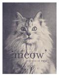 Famous Quote Cat