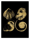 Seashell Quad Golden black