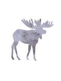 Watercolor Gray Moose