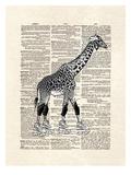 Derby Giraffe