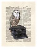 Typewriter Owl
