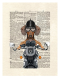 Doxie Motorcycle