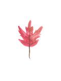 Watercolor 3 Leaf