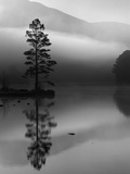 Scots Pine Tree Reflected in Lake at Dawn, Loch an Eilean, Scotland, UK Reproduction d'art par Pete Cairns