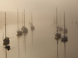 Sailboats on their Harbor Moorings  in Early Morning Fog