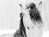 Snow Daze III Crop Aluminium par Lisa Cueman