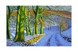 Green Trees  Winter  Dam Lane  Derbyshire