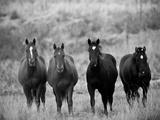 Horses  Montana  USA