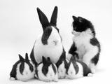 Blue Dutch Rabbit and Four 3-Week Babies and Black-And-White Kitten