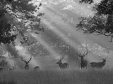 Deer Black And White Photography