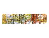 Autumn Lake II