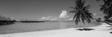Palm Tree on the Beach  Moana Beach  Bora Bora  Tahiti  French Polynesia