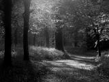 Chemin traversant une forêt de hêtres avec des campanules au printemps, Lanhydrock, Cornouailles, Royaume-Uni Papier Photo par Ross Hoddinott
