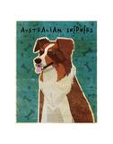 Australian Shepherd (Red)