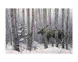 Promenade dans les bois Reproduction d'art par Stephen Lyman