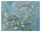 Almond Blossom, 1890 Reproduction d'art par Vincent Van Gogh