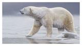 Arctic Icon