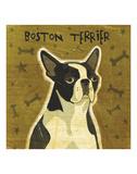 Boston Terrier (square)