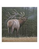 Broken Silence - Elk