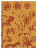 Chrysanthemum 15