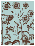 Chrysanthemum 18