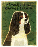 Cavalier King Charles (tri-color)