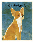 Chihuahua (red)