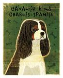 Cavalier King Charles (tri-color)
