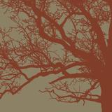 Cinnamon Tree III