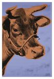 Cow  1971 (purple & orange)