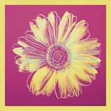 Daisy  c1982 (fuchsia & yellow)