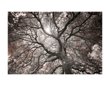 Ethereal Tree