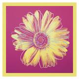 Daisy, c.1982 (fuchsia & yellow) Reproduction d'art par Andy Warhol