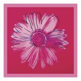 Daisy  c 1982 (crimson and pink)
