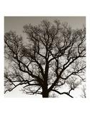 Early Winter Tree