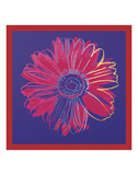 Daisy  c1982 (blue & red)