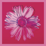 Marguerites Daisy, c. 1982 (rouge et rose) Reproduction d'art par Andy Warhol