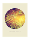 Inspirational Circle Design - Autumn Trees: Don't Forget to Look Up Every Now and Again