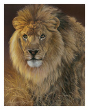 Power and Presence - African Lion
